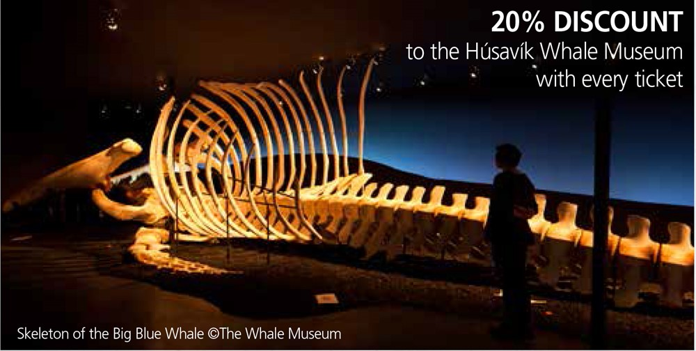 Húsavík Whale Museum Discount Gentle Giants