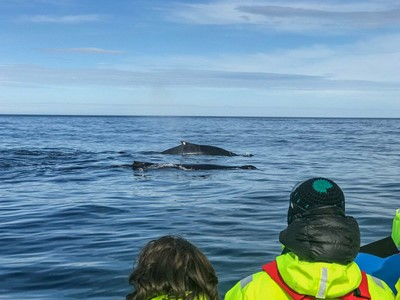 two humpbacks next to RIB